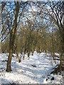 TQ4458 : Footpath up hill in Cudham Frith by David Anstiss