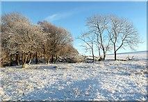 NS3306 : Snow Scene Near Threave by Mary and Angus Hogg