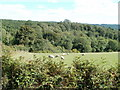 ST3694 : Sheep grazing in field adjoining woodland by Jaggery