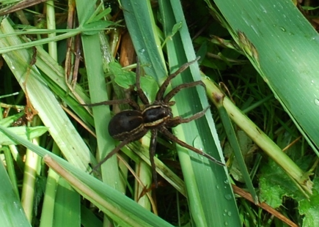 Not very incey -wincey at all