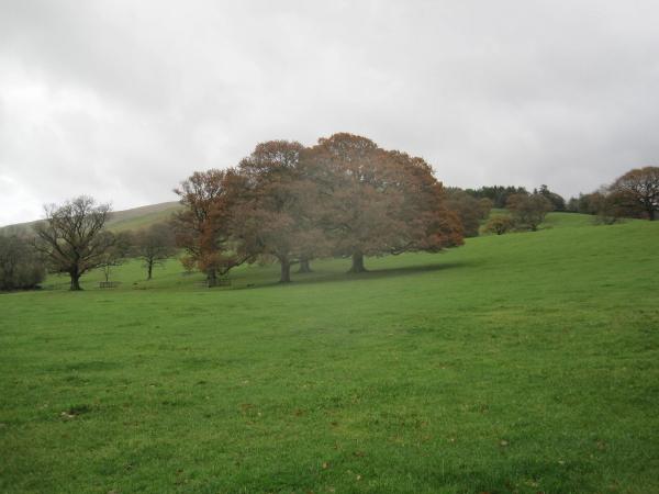 Parkland near Barbon Manor