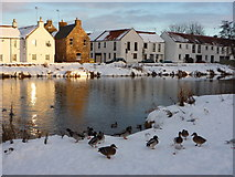 NT5173 : East Lothian Townscape : Ducks and Gulls on the Banks of the Tyne Above Nungate Bridge, Haddington by Richard West