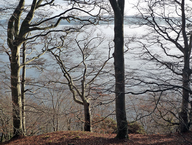 Moray Firth through the trees of Craig Wood