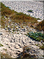 SV8708 : Sand and flora on Periglis beach by David Lally