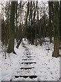 TQ4360 : Steps in Twenty Acre Shaw by David Anstiss