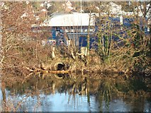 SX9193 : River Exe bank near St David's station by David Smith