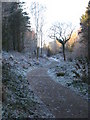 SW6443 : Woodland path in Oak Wood by Rod Allday