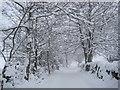 NY9369 : Snow Scene near Planetrees by Les Hull