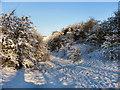 SD7606 : Path To Farm Lodge by David Dixon