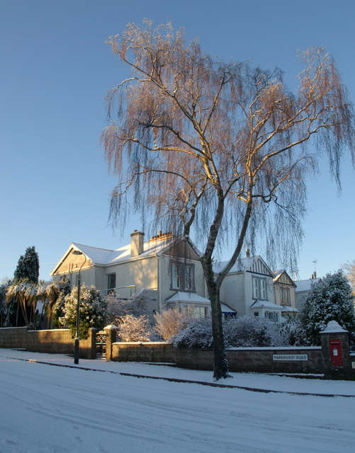 Snowy birch, Parkhurst Road, Torquay