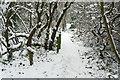 TQ2078 : Path through the carr by Alan Murray-Rust