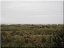 NY0265 : Caerlaverock National Nature Reserve by Jonathan Thacker