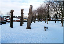 ST3186 : Pollarded trees on west side of recreation ground, Pill, Newport by Jaggery