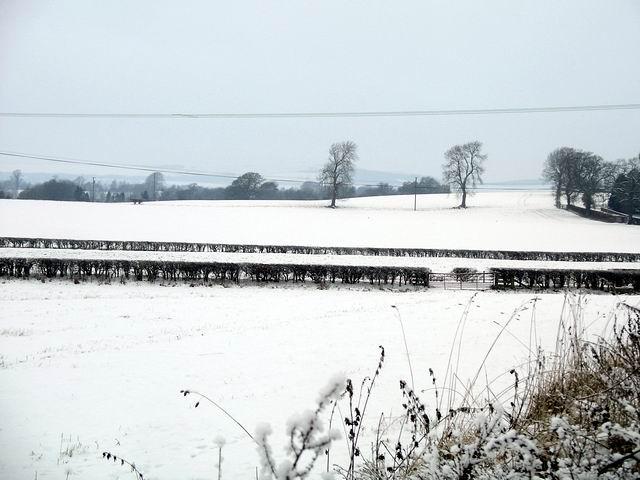Snow covered fields, Halleaths