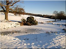 NZ1265 : Frozen pond north of West Wood by Andrew Curtis