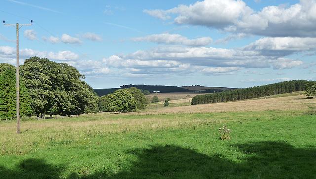 Parkland near Kiln Pit Hill