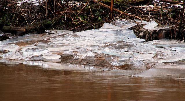 Ice, River Lagan, Stranmillis, Belfast (4)