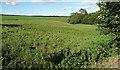 NZ0356 : Farmland near Kiln Pit Hill (3) by Stephen Richards