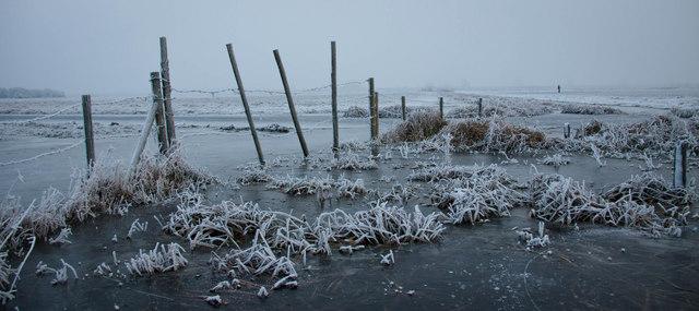 Frozen washlands