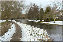 TL4457 : River Cam by Coe Fen by Alan Murray-Rust