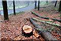 J3268 : Thinned-out trees, Minnowburn, Belfast (1) by Albert Bridge