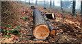 J3268 : Thinned-out trees, Minnowburn, Belfast (2) by Albert Bridge