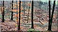 J3268 : Thinned-out trees, Minnowburn, Belfast (3) by Albert Bridge