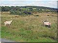 SO6278 : Catherton Common by Trevor Rickard