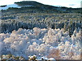 NH5667 : Frosty trees in Glen Glass by Dave Fergusson