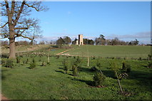 SO8845 : Evergreen Shrubbery in Croome Park by Philip Halling