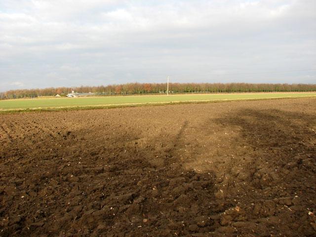 Fields by Old Buckenham airfield