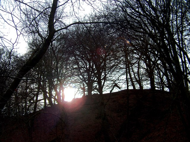 Sunshine silhouetting winter trees in Abney Clough