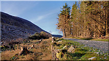 J3629 : Clear fell and trees, Donard forest, Newcastle by Albert Bridge