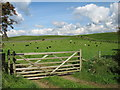 NY1425 : Sheep may safely graze ... by David Purchase