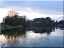 TQ1673 : Ham riverside: looking upstream toward Eel Pie Island by Stefan Czapski
