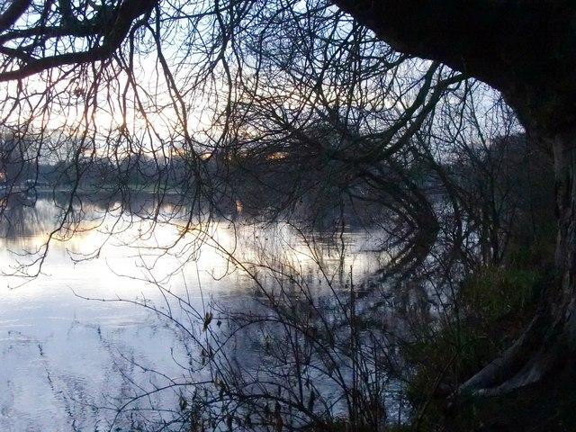 Twickenham riverside, with overhanging trees