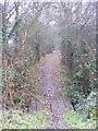 TM3665 : Carlton Lane Bridleway by Geographer