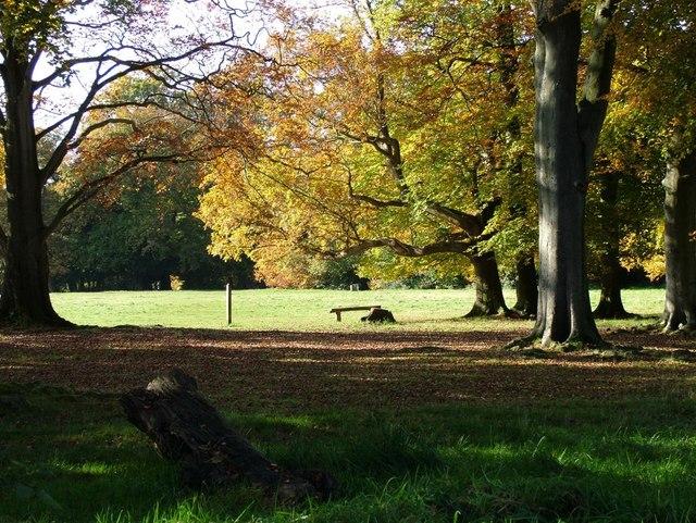 Donkey Green at Box Hill - National Trust