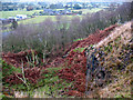 SJ8760 : Former quarry on Congleton Edge by Stephen Craven