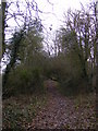 TM3469 : Segmore Lane footpath to the A1120 Badingham Road by Adrian Cable
