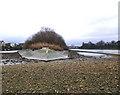 TQ2177 : Chiswick Eyot at low tide by Stefan Czapski