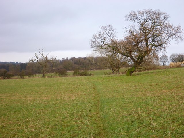 Teesdale Way, north of Hill House