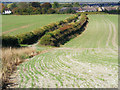 SP7600 : Farmland and bridleway, Chinnor by Andrew Smith