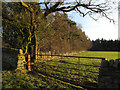NZ1529 : Woodland edge south of 'New Belt' by Trevor Littlewood