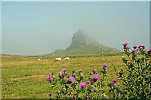 NU1341 : Misty morning - Lindisfarne Castle by Roger Lombard