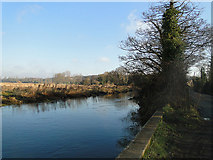 TG1413 : River Wensum after heavy rain in the preceding days by Adrian S Pye