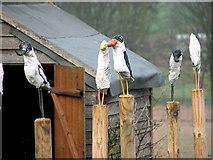 TF9740 : Sheet metal birds, Westgate by Evelyn Simak