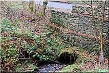 J4681 : Culvert, Crawfordsburn Country Park by Albert Bridge