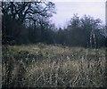 SP6715 : Site of Wood Siding Station, Bucks by David Hillas