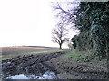 TM0186 : Farm Track near Limekiln plantation, East Harling by Adrian S Pye